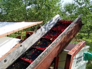 Cherry Harvest, Peninsular ARS